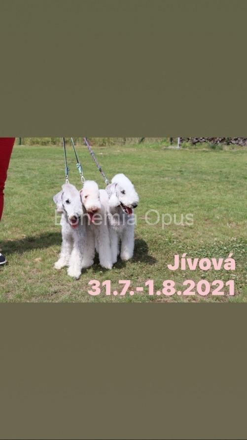 GDVX8790