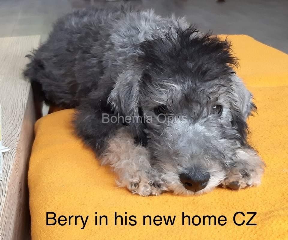 Berry-042021IMG_E4772