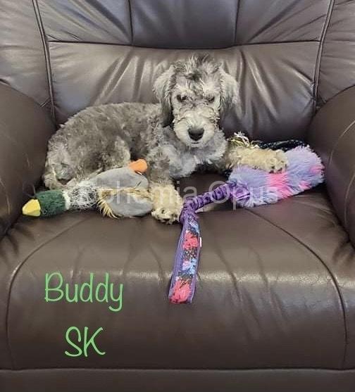 Buddy-042021-IMG_E5044