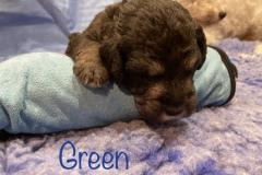 14-days-Green